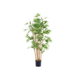 Bambou Japonais à feuillages dense