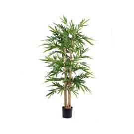 Bambou Gros Tronc à feuillages dense