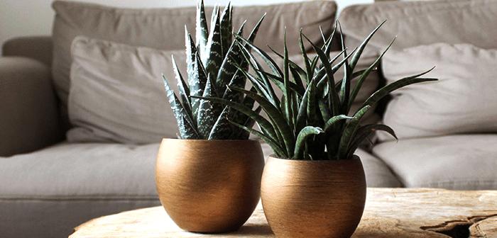 pots-floralies