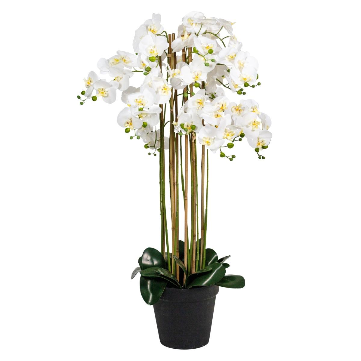 Composition d'Orchidées à 10 hampes