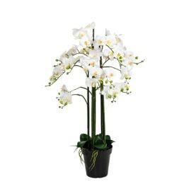 Composition d'orchidée à 7 hampes