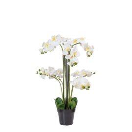 Composition d'orchidée à 8 hampes