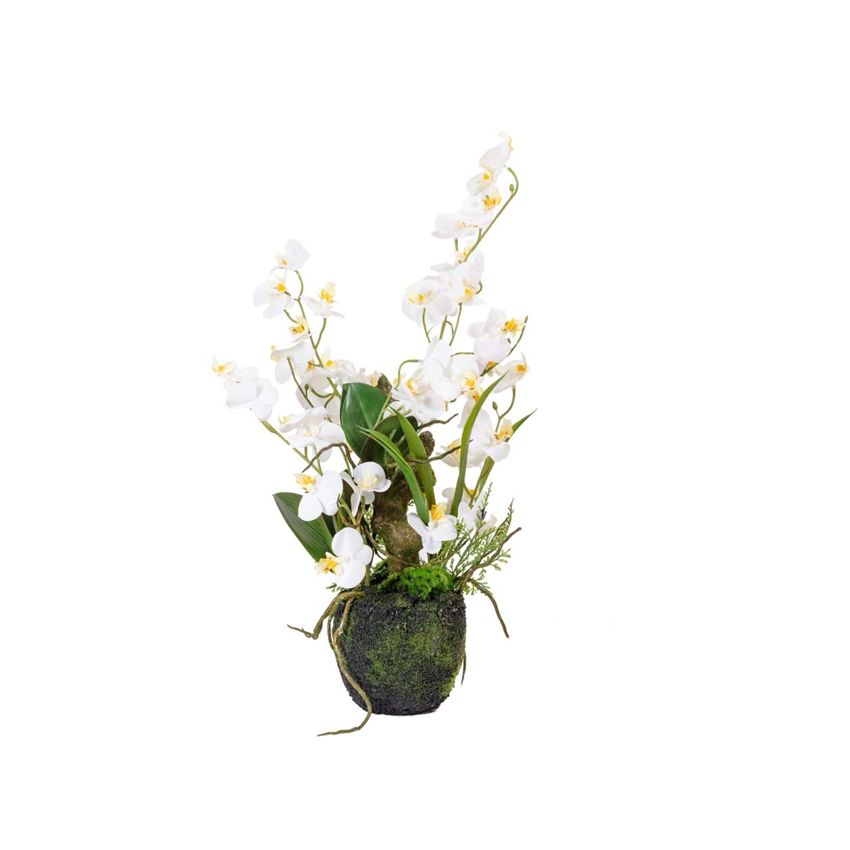 Orchidée arrangement H 51 cm