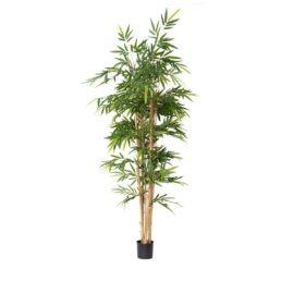 N-Bambou Gros Tronc