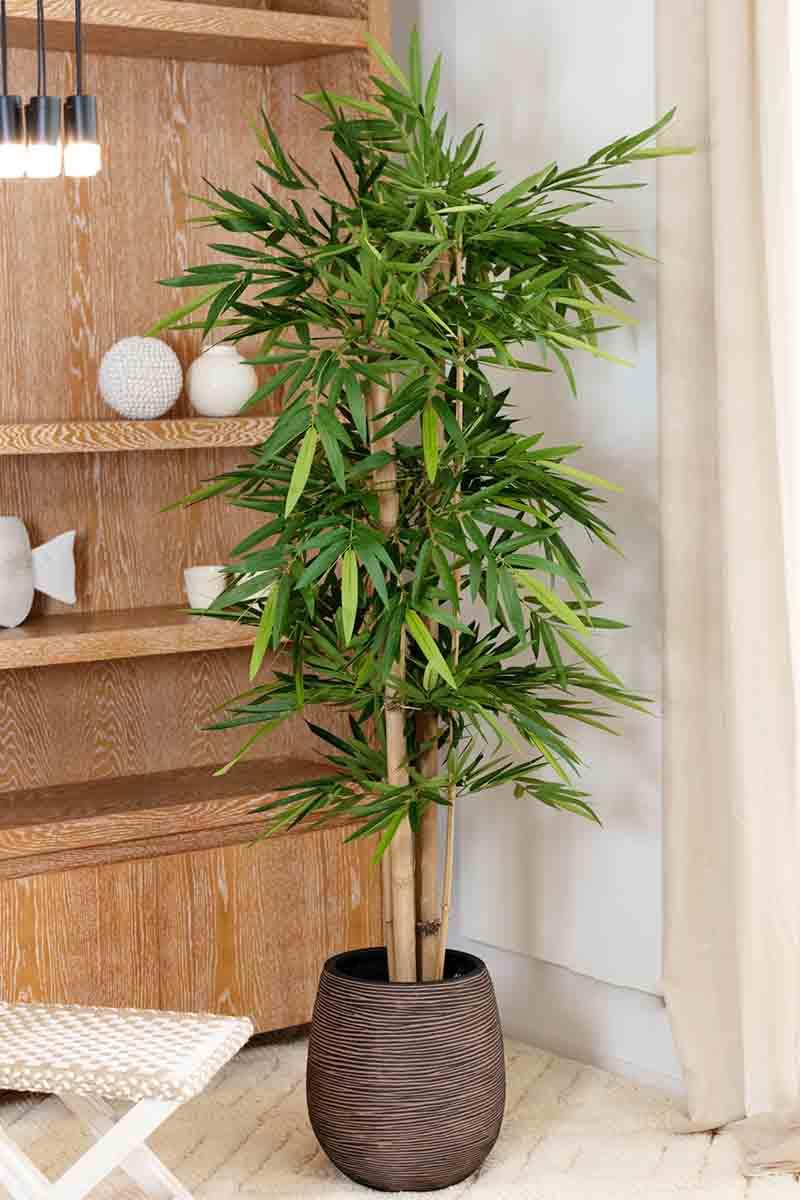 N Bambou Gros Tronc