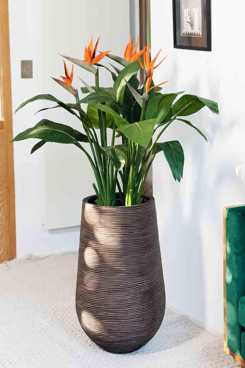 Strelitzia à fleur orange